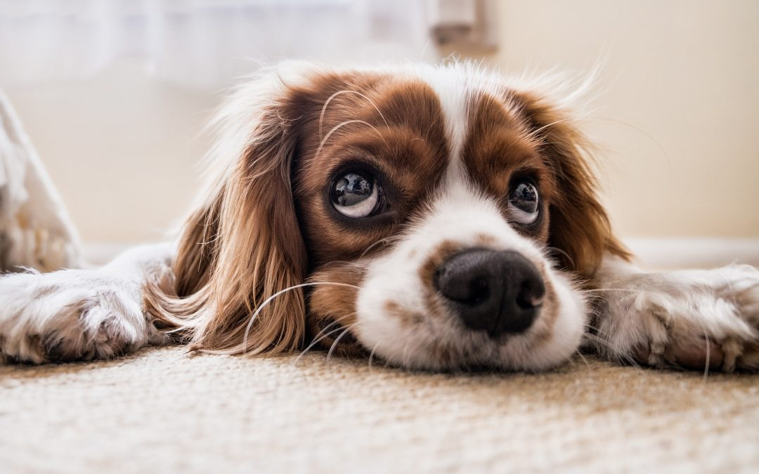 Tips for Keeping Your Carpet Clean with Pets & Kids